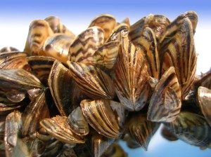 JustMussels