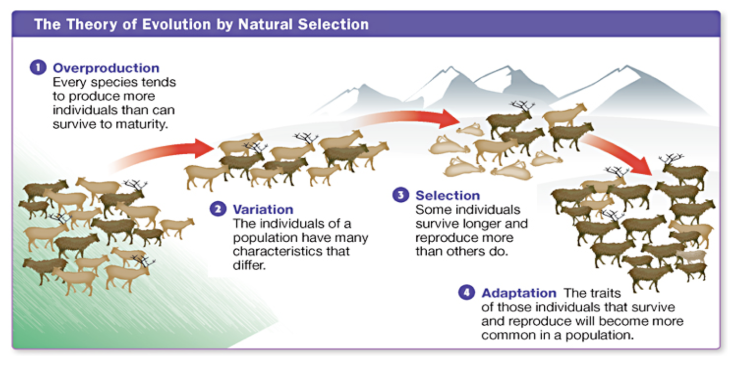 Natural-selection